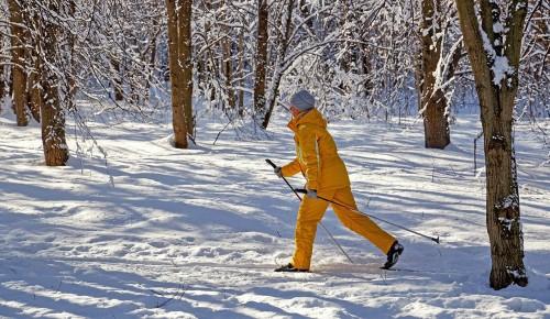 В Воронцовском парке проложили лыжные трассы для взрослых и детей