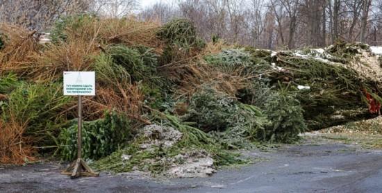"""""""Елочный круговорот"""": где в ЮЗАО сдать на переработку новогоднее дерево"""