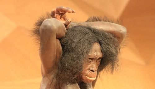 Антропологический сериал «Виды людей» Дарвиновского музея стал финалистом премии РАН