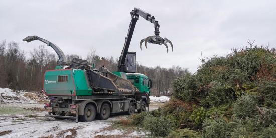 Пункт приема новогодних деревьев в Теплом Стане наполовину занят сданными елями