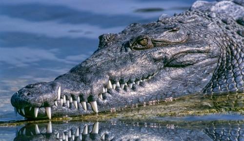 """Дарвиновский музей приглашает на праздник """"Приключения одного аллигатора"""""""