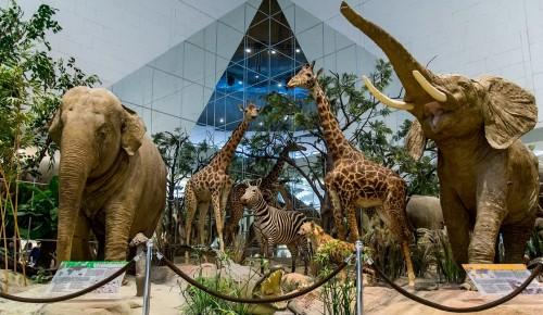 Школьники могут бесплатно посетить Дарвиновский музей