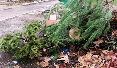 Пункты утилизации новогодних елок будут открыты в Академическом районе до конца февраля
