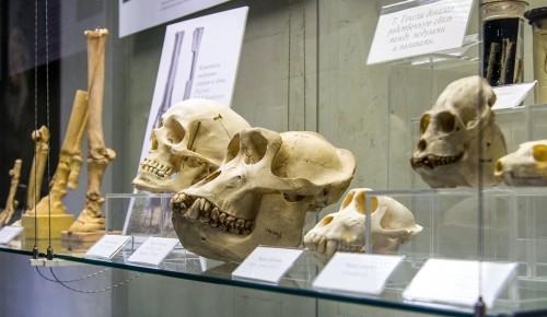 К новогодним праздникам подготовлен онлайн-квест в Дарвиновском музее
