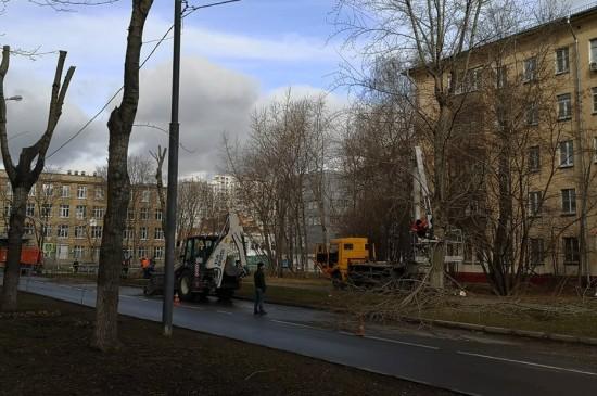В Академическом районе произвели очистку деревьев от сухих и надломанных ветвей