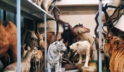 Дарвиновский музей представляет новый онлайн-проект «Загляни в хранилища музея»
