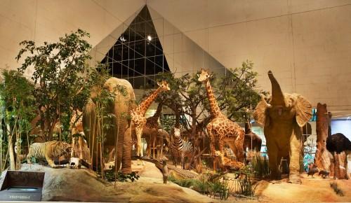 Дарвиновский музей стал партнером городского семейного фестиваля «Луч»