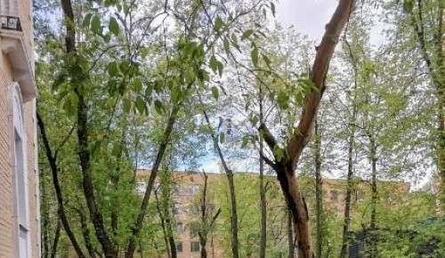 Сломанное дерево спилили на улице Вавилова