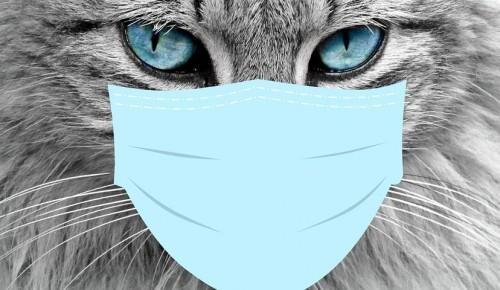 Жителям района напоминают: возможность заразиться коронавирусом от животных крайне мала