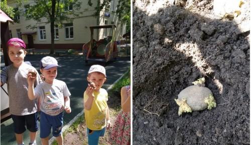 Дошколята образовательного комплекса занялись выращиванием овощей