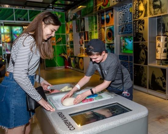 Посетители Дарвиновского музея смогут раскрыть тайны клетки с помощью обновленного интерактивного экспоната