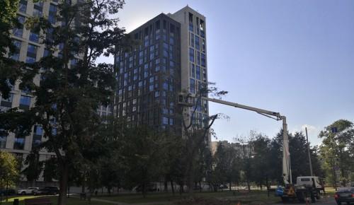 С деревьев на улице Дмитрия Ульянова коммунальщики удаляют сухие ветки