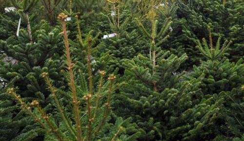 Пункты приема елок будут работать до конца февраля