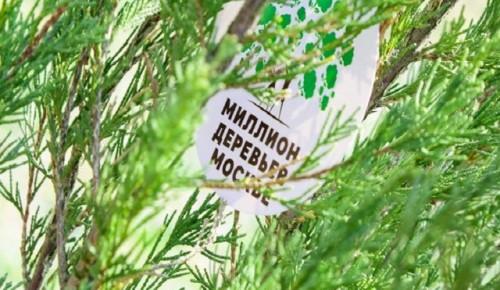 Это весной в Черемушках появятся растения разных сортов