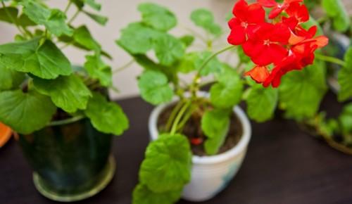 Специалисты «Московского долголетия» провели занятие по цветоводству