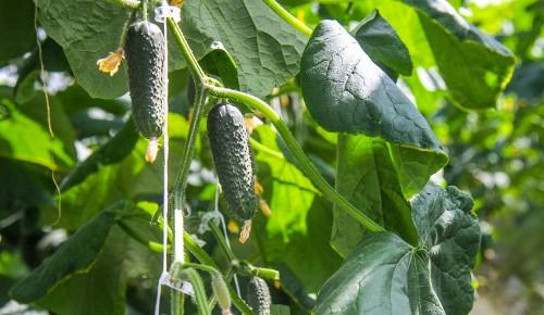 «Московское долголетие» запускает новое онлайн-направление «Садоводство»
