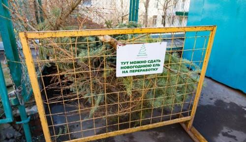 """В Гагаринском районе можно поучаствовать в экологической акции """"Елочный круговорот"""""""