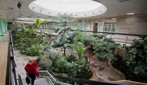В Зимнем саду Московского дворца пионеров зацвело растение, названное в честь богини Дианы