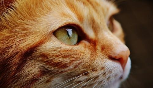Роспотребнадзор: коронавирус не передается через домашних животных