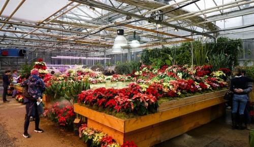 В ботаническом саду Дворца пионеров расцвело много новых растений