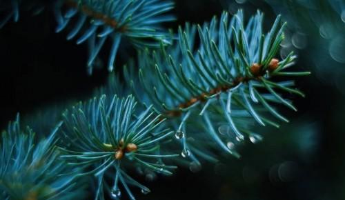 Специалисты Жилищника продолжают вывозить новогодние деревья с пунктов приема в районе Коньково