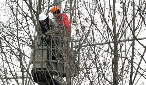 Кронирование деревьев провели в районе Коньково на нескольких улицах