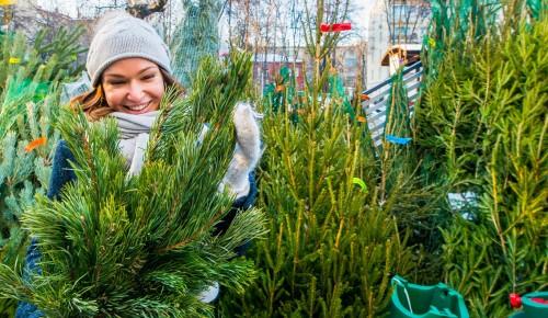 В столице заработали 379 пунктов приема елок