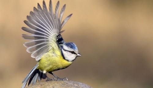 С приходом весны в парках Москвы начали петь птицы