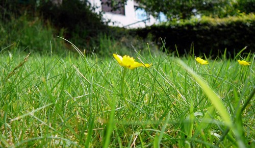 Ухаживать за газонами в столице теперь будут по-новому.