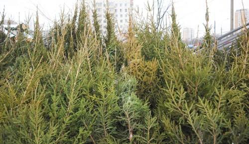 Новогодние елки используют для благоустройства улиц и экологических троп