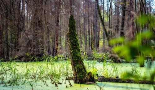 Мосприрода приглашает отметить Всемирный день водно-болотных угодий