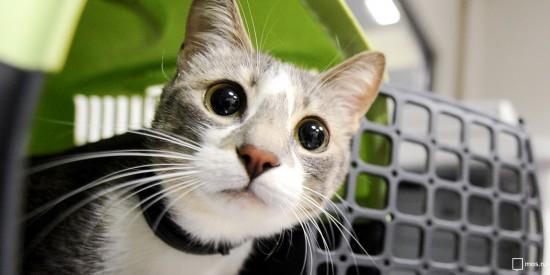 Где и когда в Теплом Стане можно привить собак и кошек от бешенства бесплатно