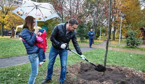 Родители новорожденных забронировали на mos.ru более трех тысяч именных деревьев