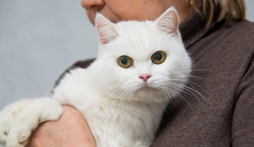 В марте и апреле привить домашних животных от бешенства можно будет бесплатно