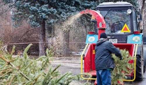 Жители Теплого Стана сдали на утилизацию более 280 ёлок