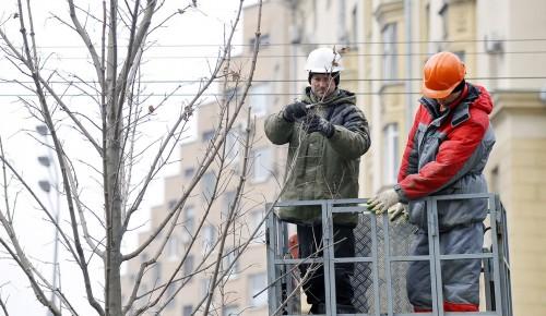 В Теплом Стане проведут санитарную обрезку деревьев