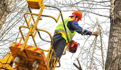 В Теплом Стане начались работы по обрезке деревьев