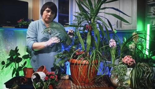 «Московское долголетие»: как перевезти комнатные растения на дачу