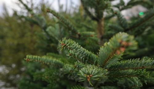 В Битцевском лесу работает пункт приема елок