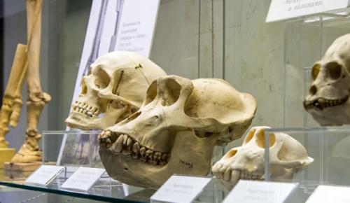 Пройти онлайн-квест по Дарвиновскому музею можно в проекте «Узнай Москву»