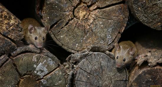 """Чем похожи полевые и летучие мыши - об этом расскажут в """"Битцевском лесу"""""""
