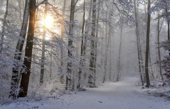 В экоцентре «Битцевский лес» пройдет тематическое занятие для малышей и их родителей «Зимние сказки»