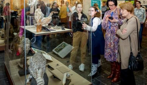 В Дарвиновском музее открылась выставка «Совы»