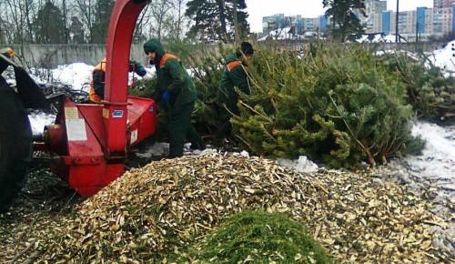 Утилизация елок в Ясеневе продлится до 1 марта