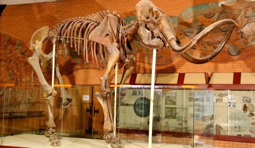 В ЮЗАО можно пройти палеонтологический квест