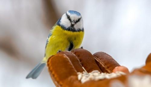 В Битцевском лесу пересчитали птиц