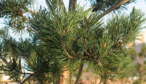 Сдать елку на переработку можно до конца февраля