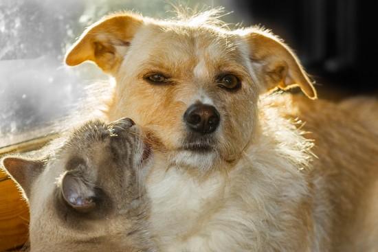 Привить животных от бешенства в 2020 году в Зюзине можно будет по десяти адресам