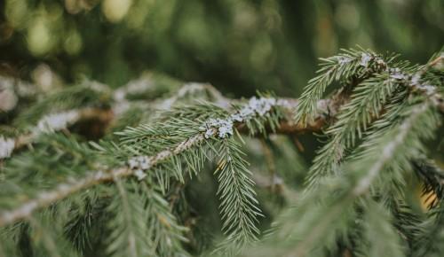 Жители Зюзина сдали более 450 елок на утилизацию в рамках акции «Елочный круговорот»
