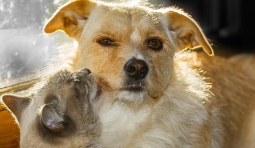 В феврале в районе Зюзино стартует бесплатная вакцинация домашних животных